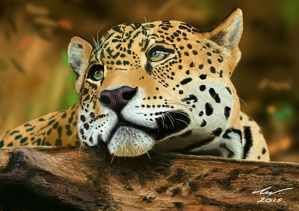 Jaguar by niveky