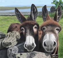 Donkeys by niveky