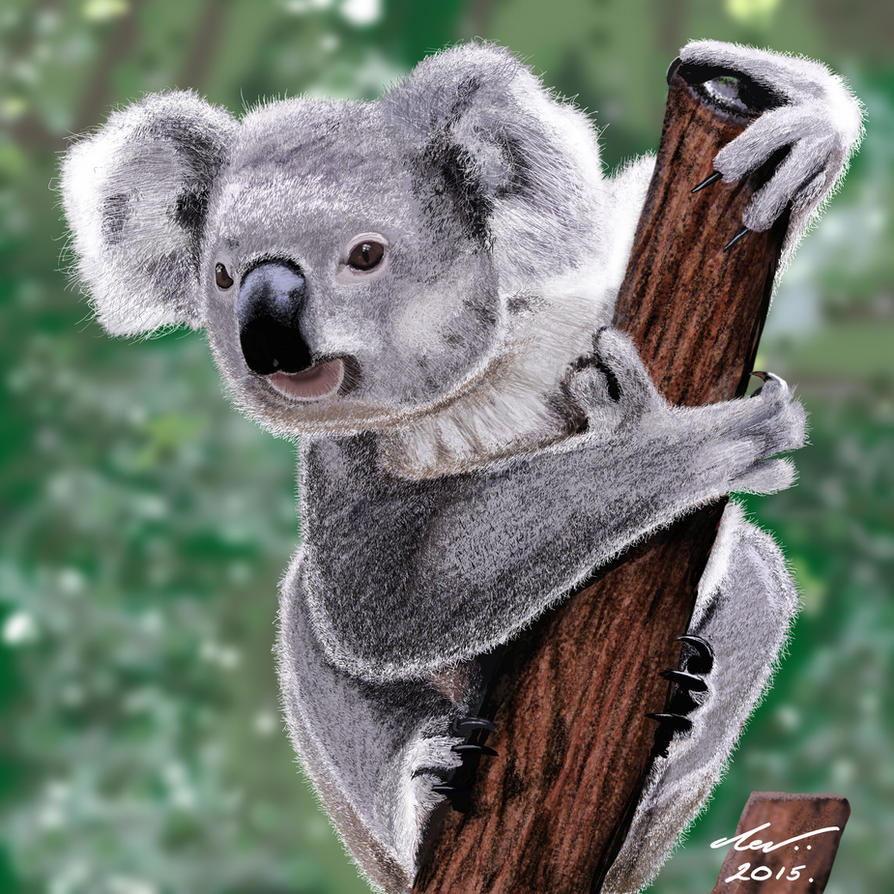 Koala Bear by niveky