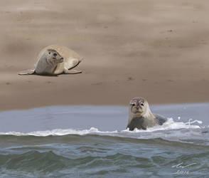 Seals by niveky