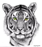 Tiger by aragornbird