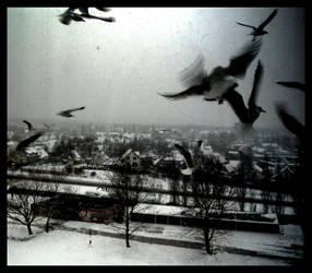 birds by ladymonroe