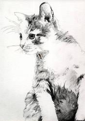 kitten drawing by whiterabbitart