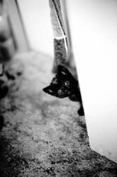 Catties II by jimothy