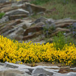 Rocks and flowers # 1 by SRATCHINSKI