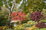 Fall in garden by SRATCHINSKI