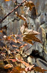 Leaves and rocks