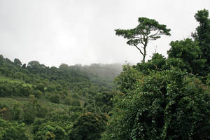 Stock 2966 - Rainforest Walk by LestatImage-Stock