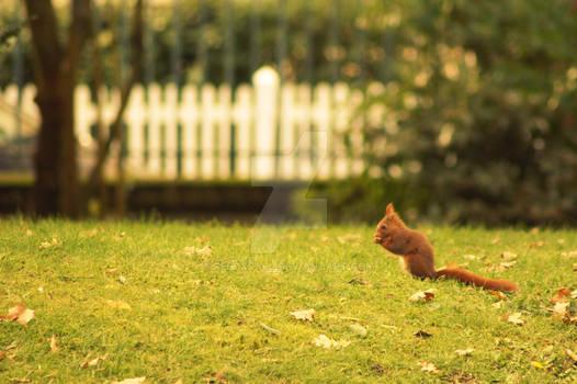 Un ecureuil.