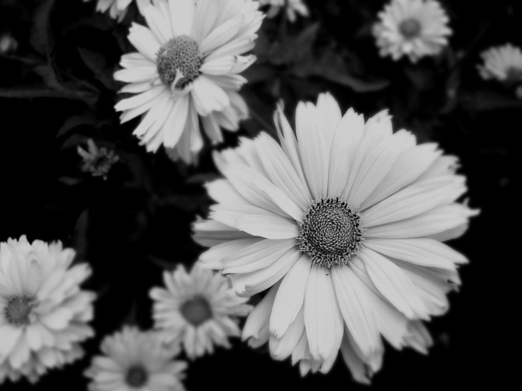 Flowers by Melliska