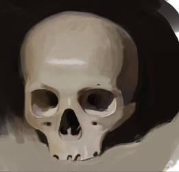 Digital Skull Study