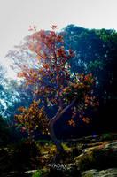 Magical Tree by YadavThyagaraj