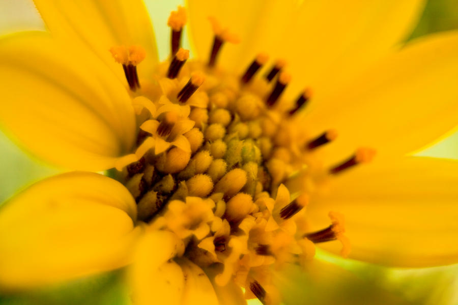 Yellow Flower Macro by robert-kim-karen