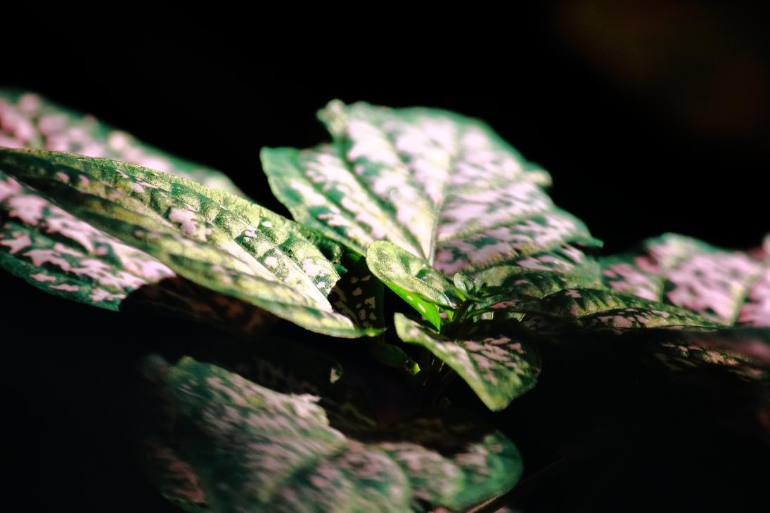 Colorful Foliage by robert-kim-karen