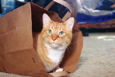 A Cat and a Bag by robert-kim-karen