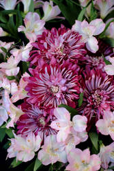 Birthday Bouquet 2 by robert-kim-karen