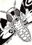 Mothra Sketch Card