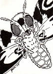 Mothra Sketch Card