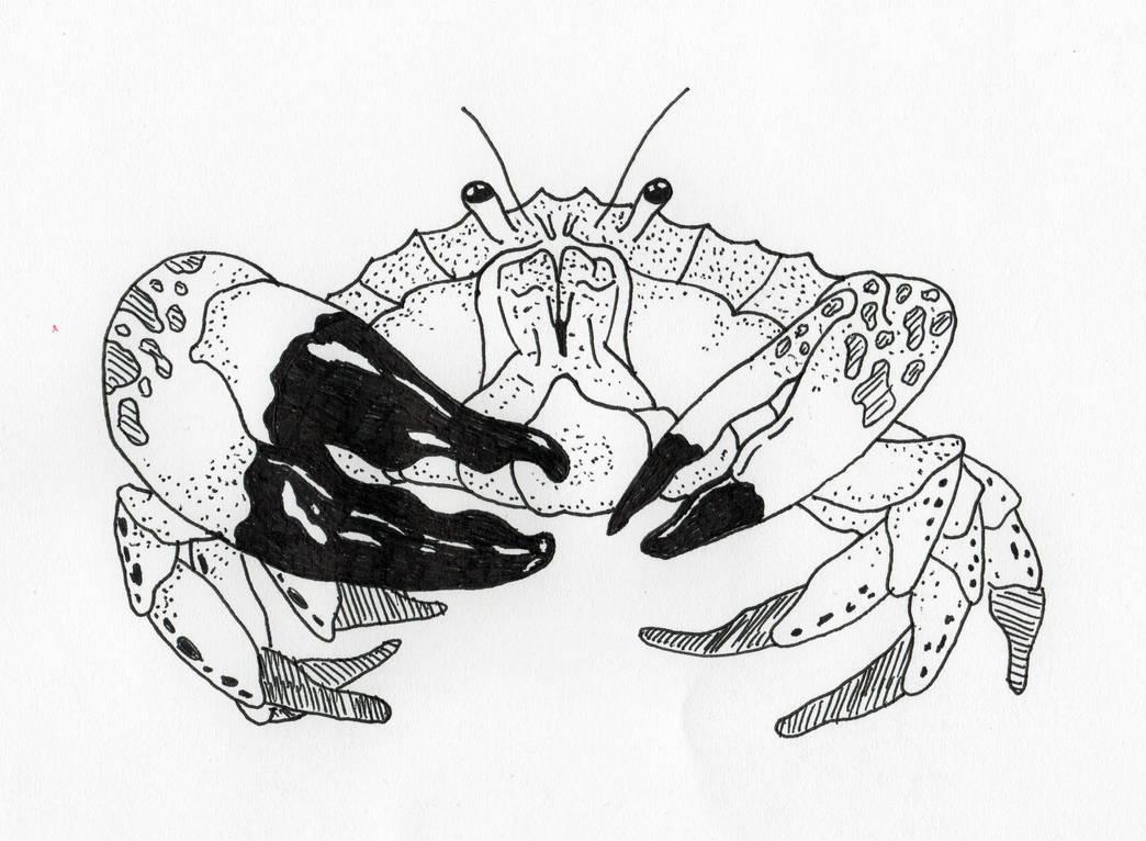 Tasmanian Giant Crab by jamsketchbook
