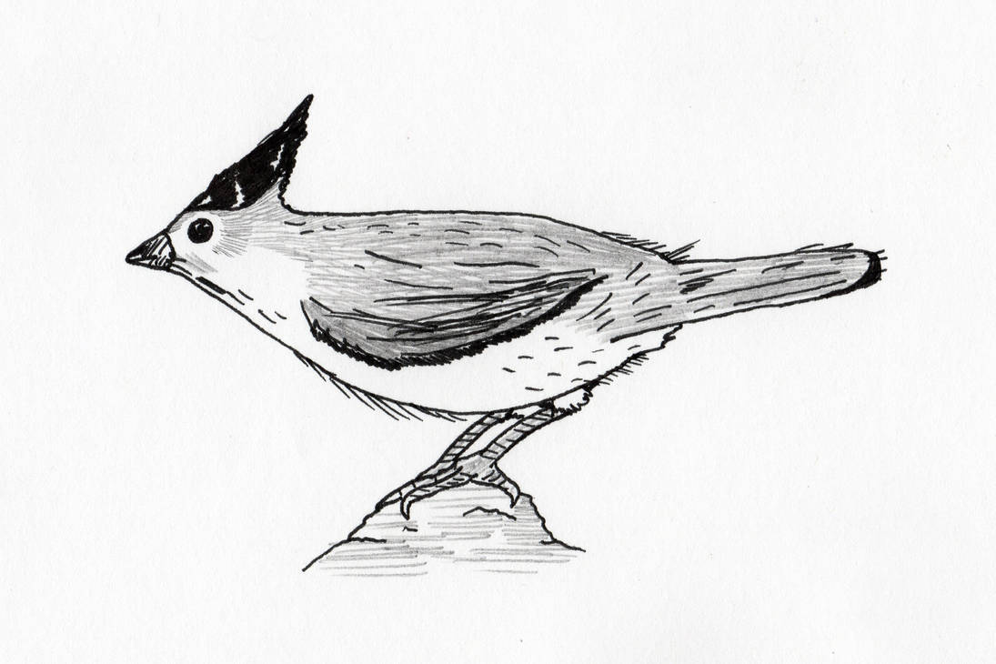 Titmouse by jamsketchbook