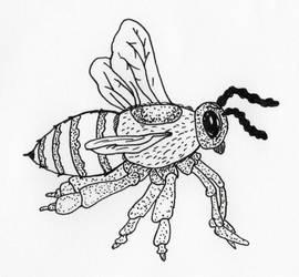 Honey Bee by jamsketchbook