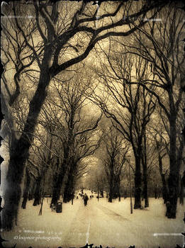The Meadows Snow