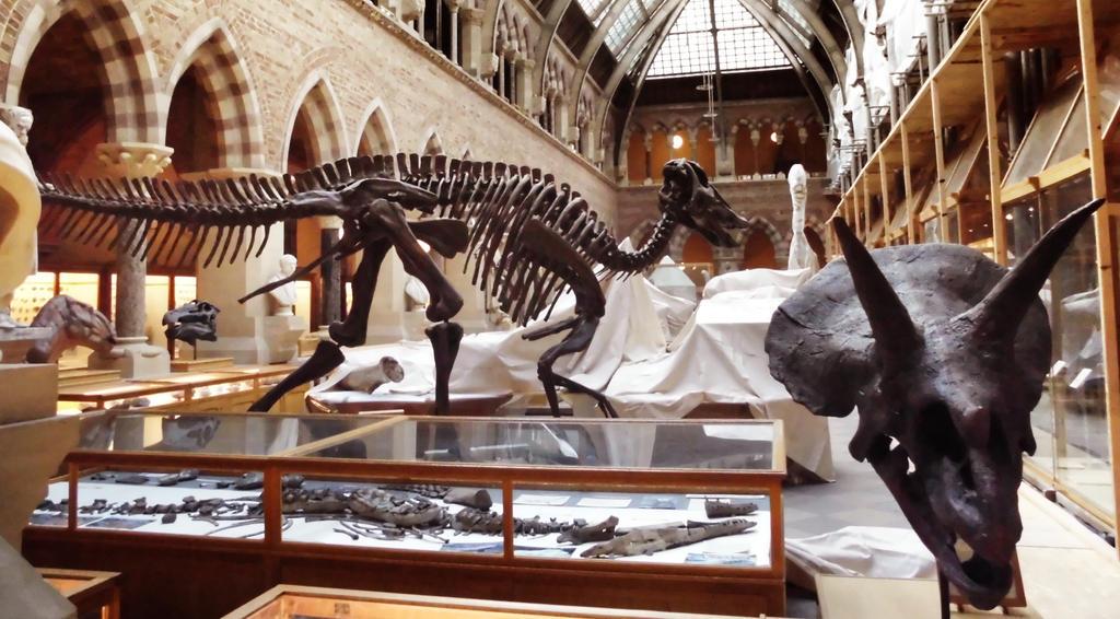 Oxford - Dinosaurios by Kaoyux