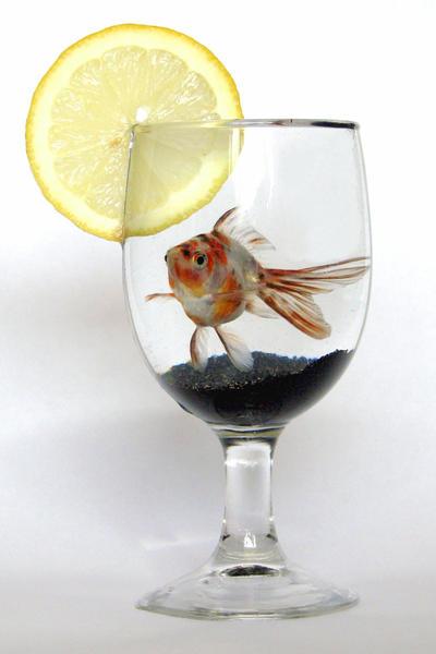 Nemo with a slice of lemon by ZannaClaire