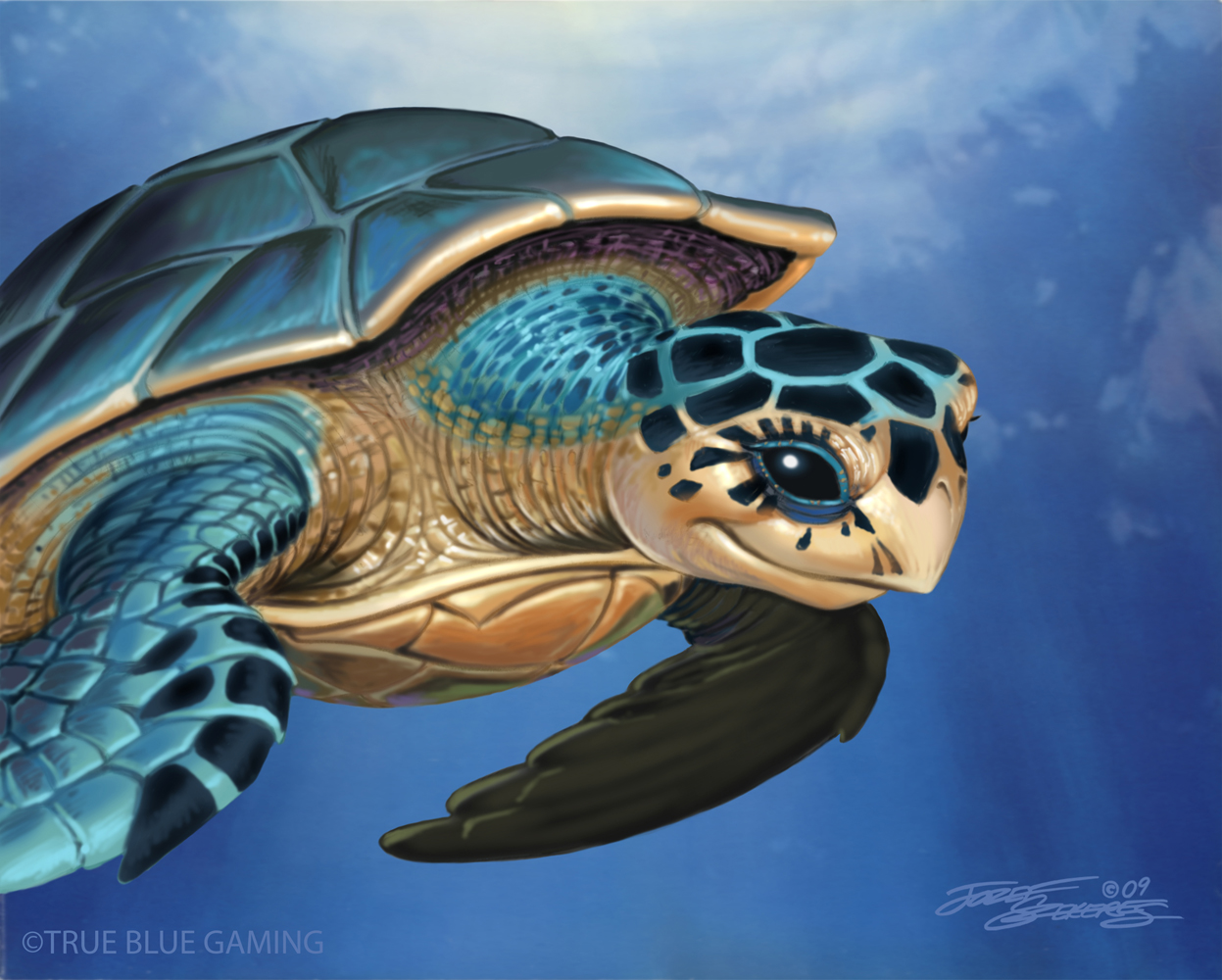 Turtle.TrueBlue.Szekeres by Jozef-Szekeres
