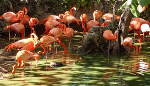 Flamingos-5e by NativeStew