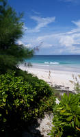 Bahamas Harbour Island Beach Path Phone Wallpaper