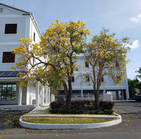 Insurance Management Yellow Trumpet Trees