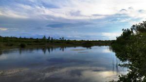 Clifton Wetland Too