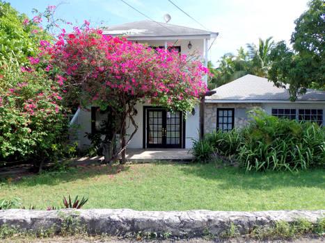 Bougainvillea Lawn