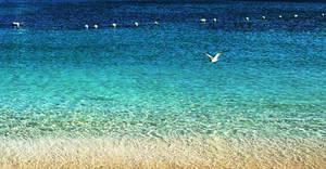Low Tide Gully