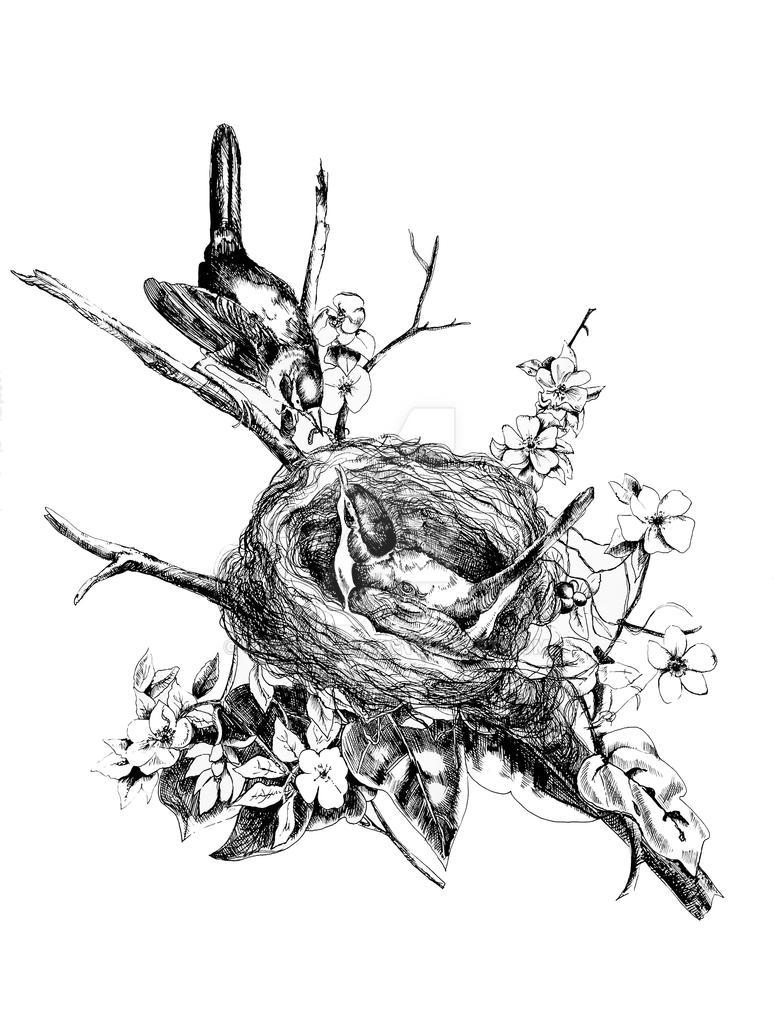 Birdsnest by stephchard
