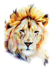 Lionp