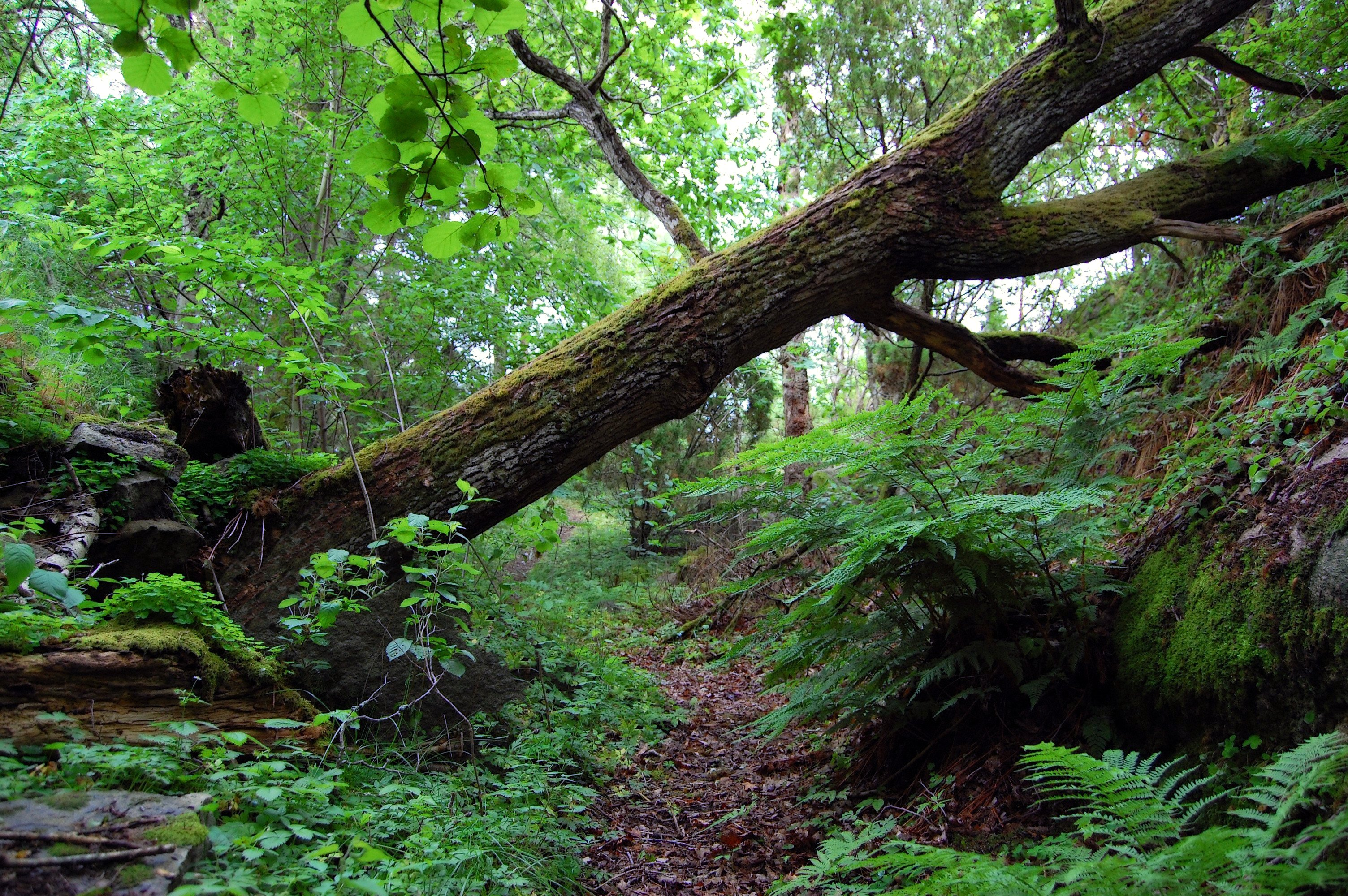 Image result for a tree falling in the forest