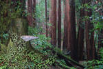 Premade Forest Background 2