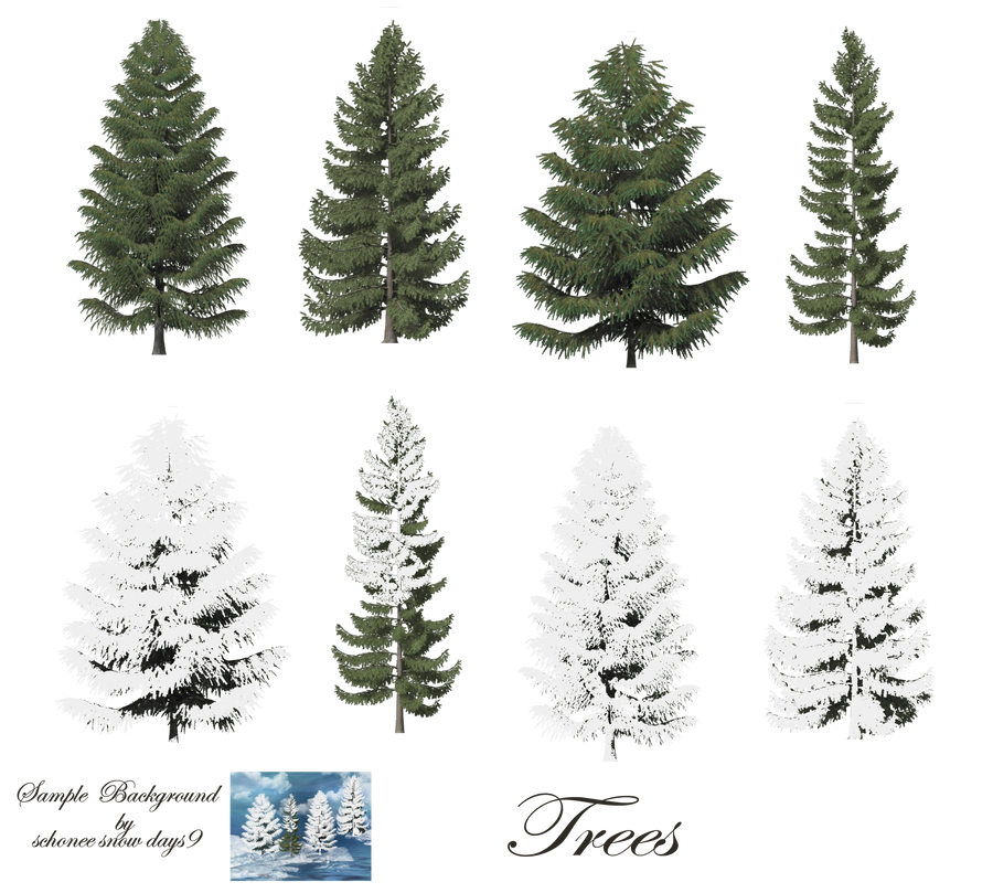 conifer black singles Conifer characteristics cones in a single year guide to pines fun fact: it takes more than the black spruce thrives in soggy soil.