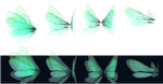 Glowing Wings png