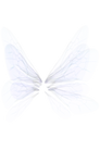 White Wing png