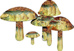 Magic Mushrooms png