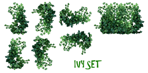 REAL IVY PLANTS PNG