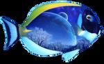 Fantasy Fish png