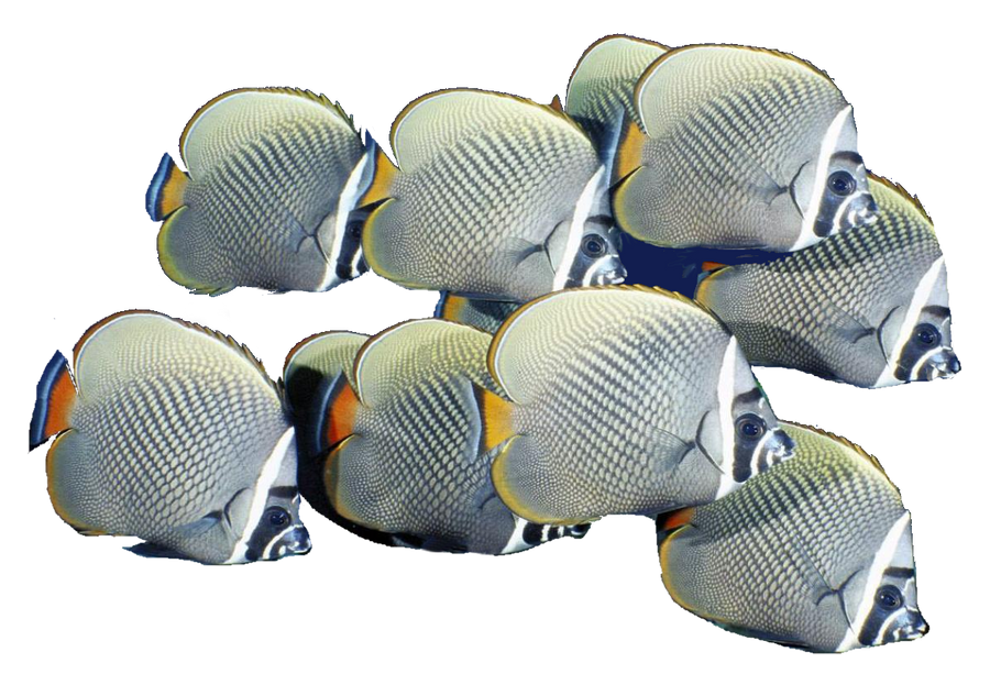 School Of Fish Png