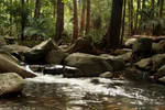 Forest Creek Background