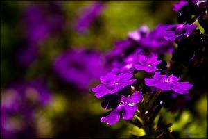 Purple gaze by nessanumen