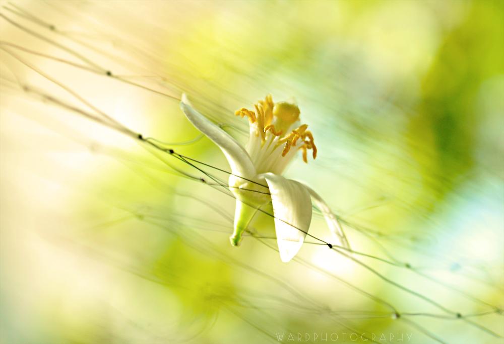 Summers' Sun by Zayoon