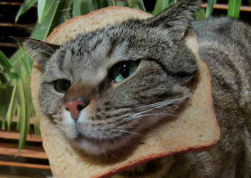 Meer Breading